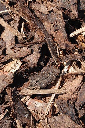bag-Amenity Bark Mulch