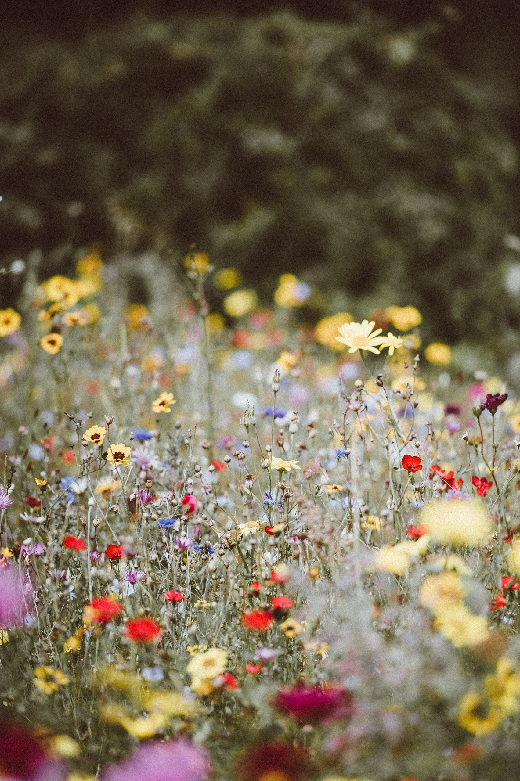 Improve sustainability with a wildflower meadow