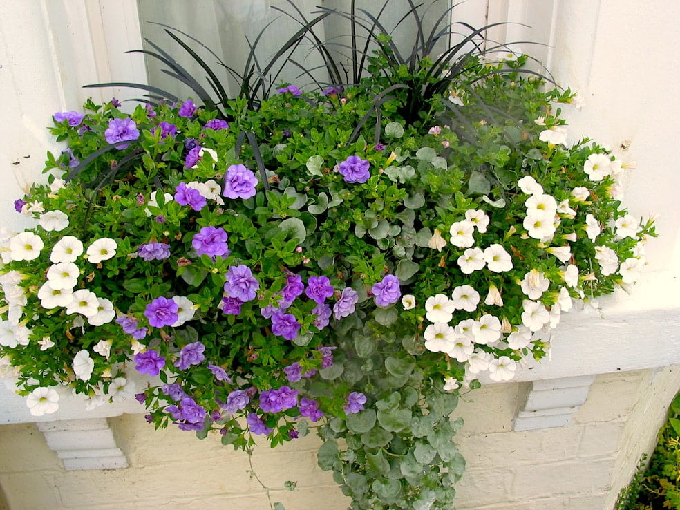 SylvaGrow Melcourt watering tips for containers