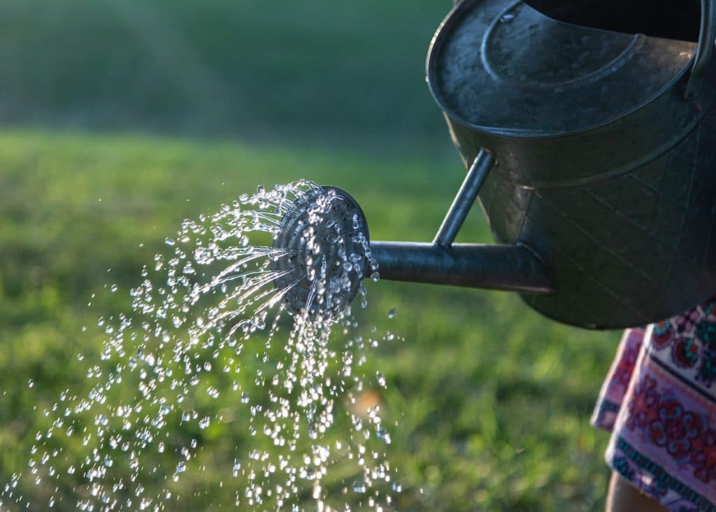SylvaGrow Melcourt watering tips